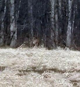 deertrees