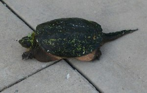 turtledriveway
