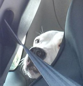 seatbelt1