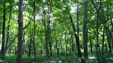 foreststarvedrock