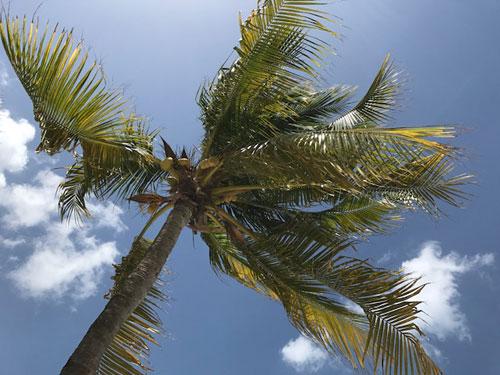 palmtreearuba